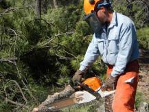 Pourquoi ne pas couper les racines des arbres avec une scie à chaîne?